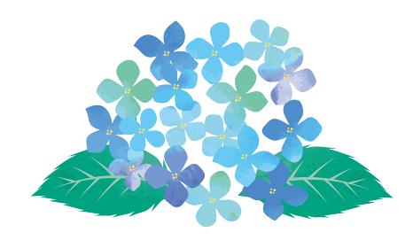 紫陽花のイラスト 手描きアナログ 水彩画 水彩タッチの梅雨のイメージあじさい