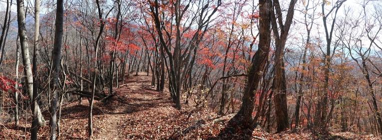 秋色と落ち葉と稜線歩き (秋/紅葉)(パノラマ)