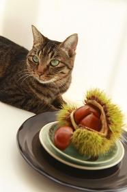 和風イメージ栗と猫
