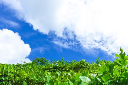 青空に大きな雲と緑の茂る背景画像 6011