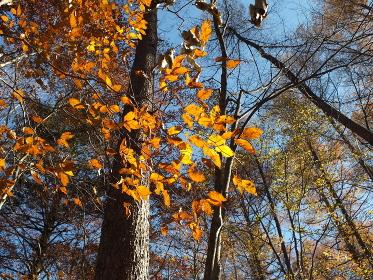 登山路から眺める秋の風景