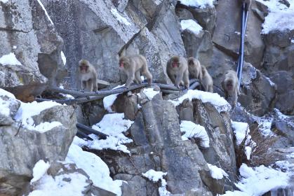サルの行列