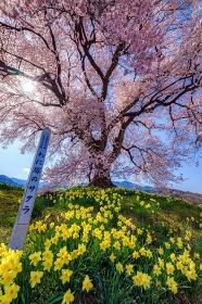 山梨県・韮崎市 わに塚の一本桜の風景