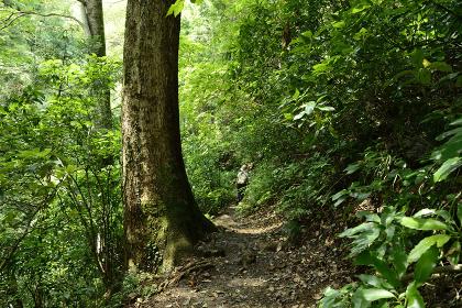 高尾山の登山路から眺める夏の風景