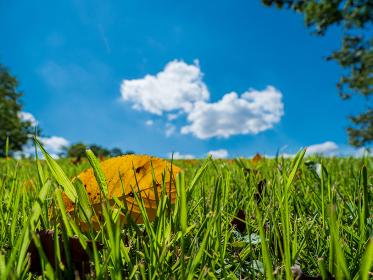 秋晴れの青空と芝生の上の枯れ葉