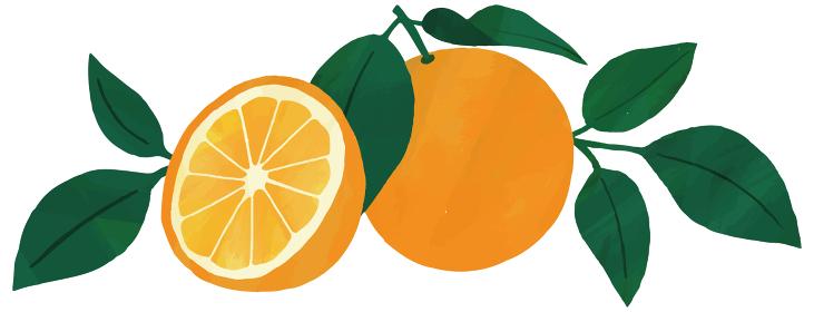 オレンジ 葉 挿絵 イラスト