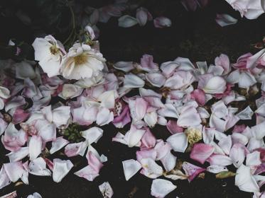 散ったバラの花びら