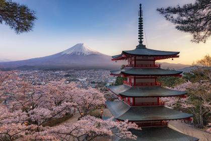 山梨県・富士吉田市 新倉山浅間神社の富士山と桜
