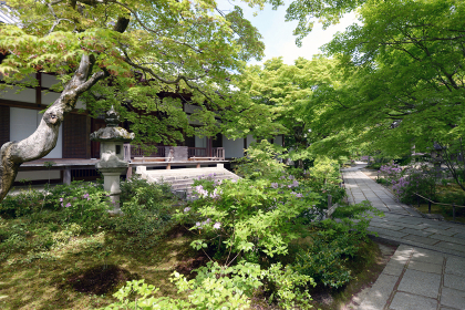 新緑の常寂光寺 本堂前の庭園 京都市嵯峨