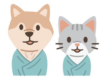検査着を着てペットドックを受診する犬と猫