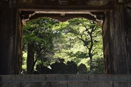 大雄山最乗寺境内の新緑