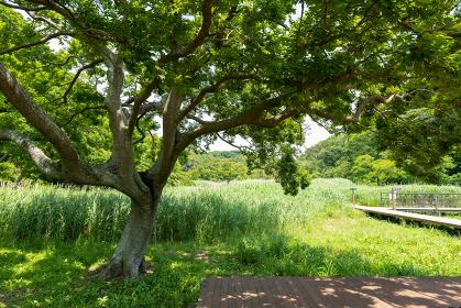 小網代の森のえのきテラス 6月 三浦半島