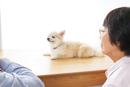 ペットショップで犬を見るシニア夫婦