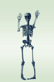手を広げる骸骨