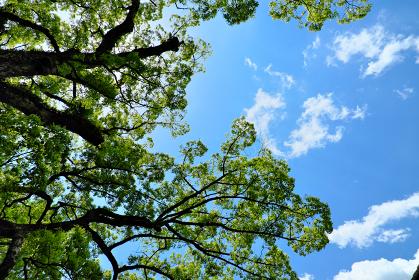 青い夏の空に広がる新緑の風景