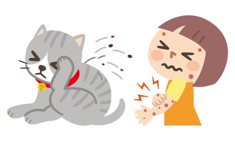 ノミで痒くて体をかきむしる猫と虫に刺された女の子