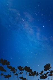 コスモスと宇宙 綺麗な夜空の風景イラスト