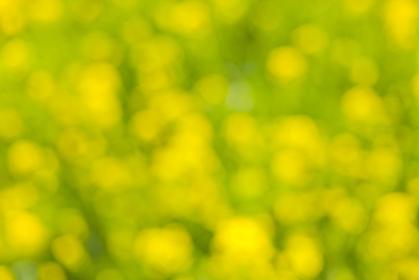 背景素材 花