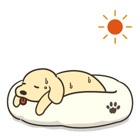 体調不良の犬と太陽 熱中症