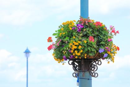 波止場の街灯に飾られた春の花