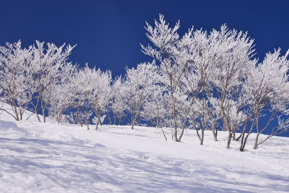 青空に映える霧氷林
