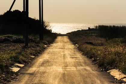 日本最南端、波照間島・サトウキビ畑の道