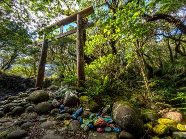 八丈富士の火口にある浅間神社の鳥居 (伊豆諸島 八丈島)