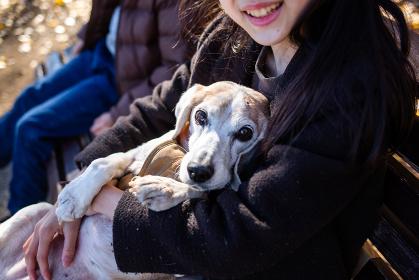 抱っこされるビーグル犬