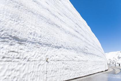 立山黒部アルペンルートの雪の大谷。富山県の観光名所。