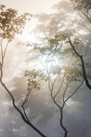 日本・7月の北海道、日勝峠の雲海と樹木