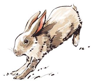 ウサギ 干支 十二支