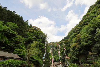 高知県中津渓谷の鯉のぼり