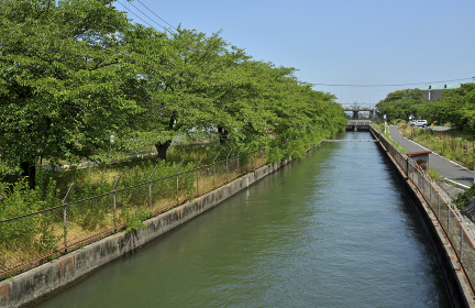 菖蒲町を流れる見沼代用水
