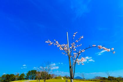 老の山公園から見る春の日本海の眺め