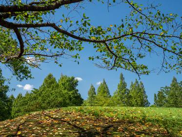 秋の青空と公園の風景