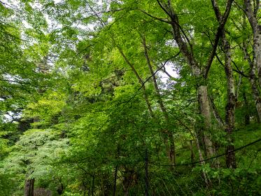 雨上がりの登山道と木々