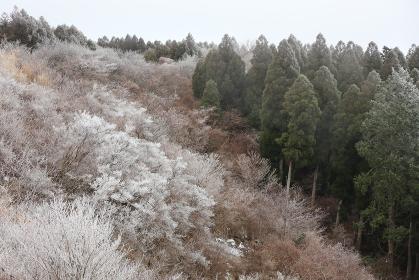 雪が積もり始めた山の木々