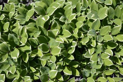 緑の絨毯 葉模様