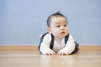 床をハイハイする赤ちゃん