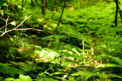 日本,福岡県,九大の森