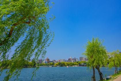 都会のオアシス 初夏の大濠公園