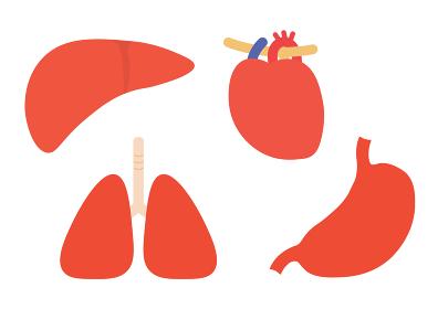 内臓 肝臓・肺・心臓・胃のイラストセット