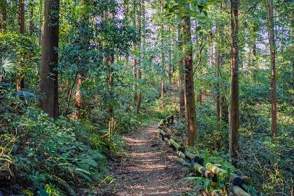 遊歩道がある緑の森の中の風景