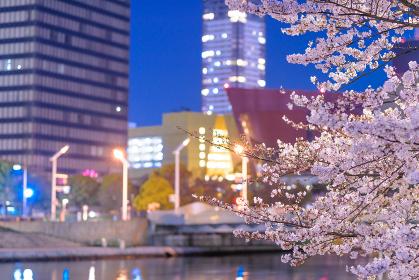 夜桜と小倉の街並み