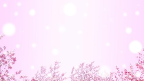 桜とピンクの背景。白い丸ボケ。新春、春の催しのバナー背景。暖かさのあるコピースペース。8kサイズ。
