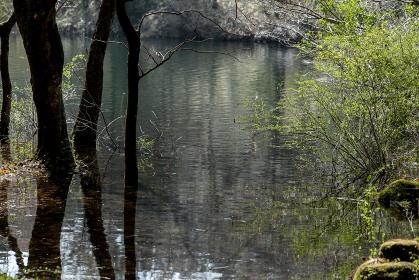 春の田貫湖湖畔の風景 4月