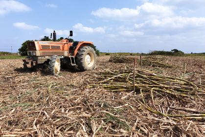 日本最南端、沖縄波照間島のサトウキビ収穫