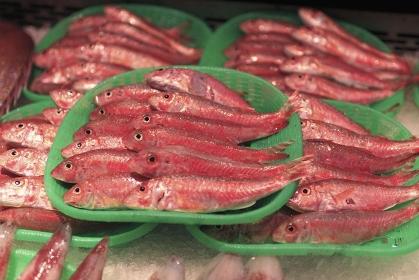 魚、金太郎