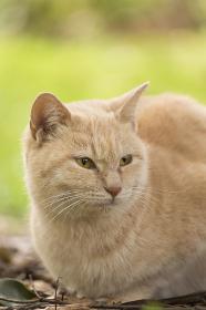 草むらでたたずむ野良猫