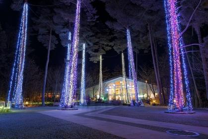 長野県・安曇野市 国営アルプスあづみの公園(堀金・穂高地区)のイルミネーション